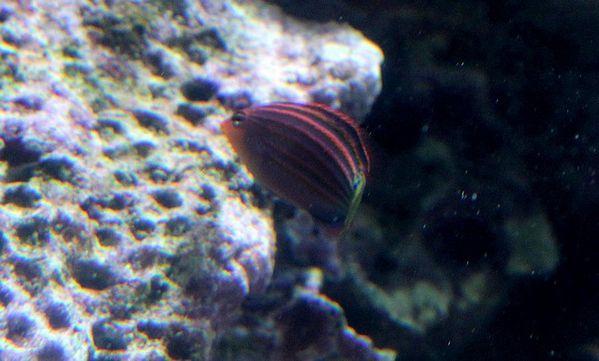 poissons-1-specimen 2087