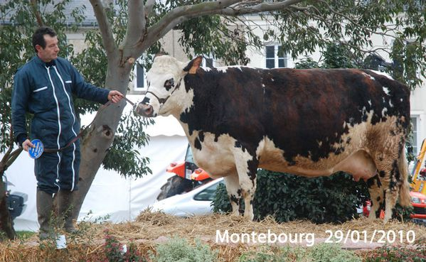vaches-130