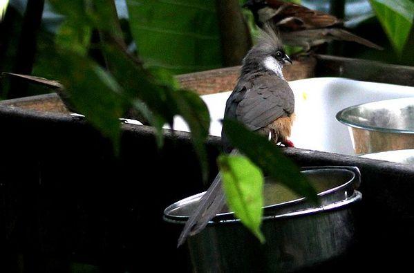 oiseaux 9587