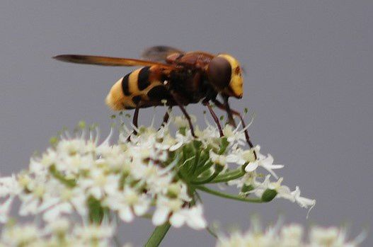 insectes-10-3891.jpg