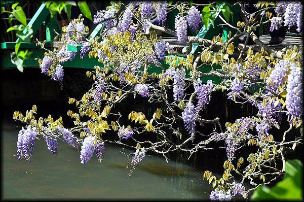 Giverny---Le-Jardin-de-Claude-Monet-21a.jpg