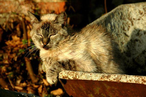 atttiude d'une chatte