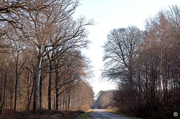 Belles images de l'hiver en Forêt de Crécy