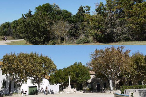 2010 09 11 Fillon arbres dans mas