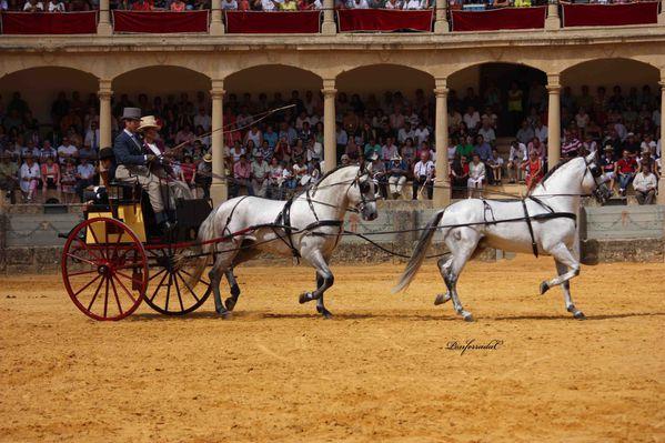 Ronda-2013-Potos-J-PONFERRADA 4778 br
