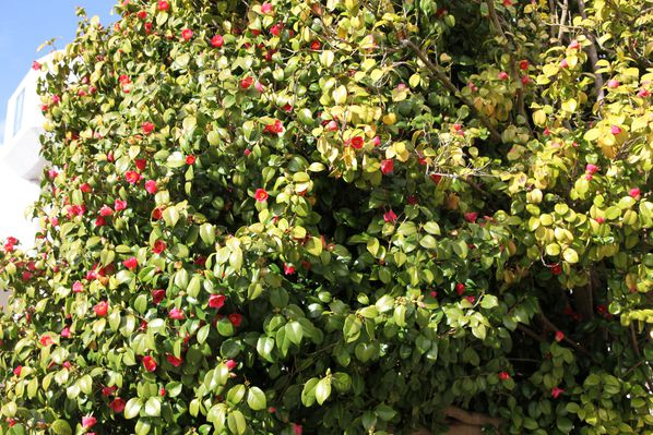 jardin-au-printemps 0762c
