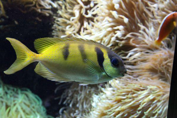 poissons-oceanopolis 1353cc