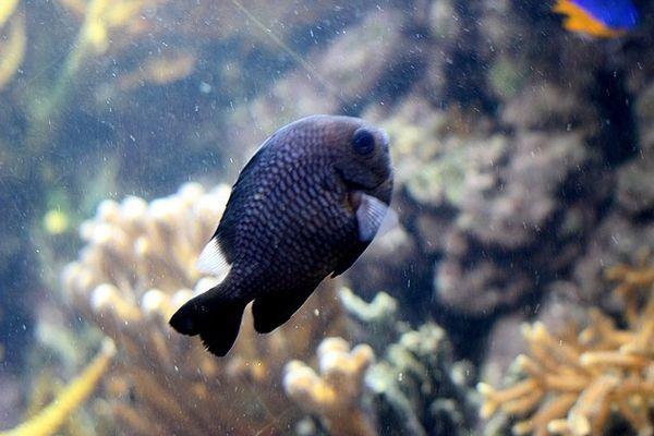 poissons-1-specimen 2116