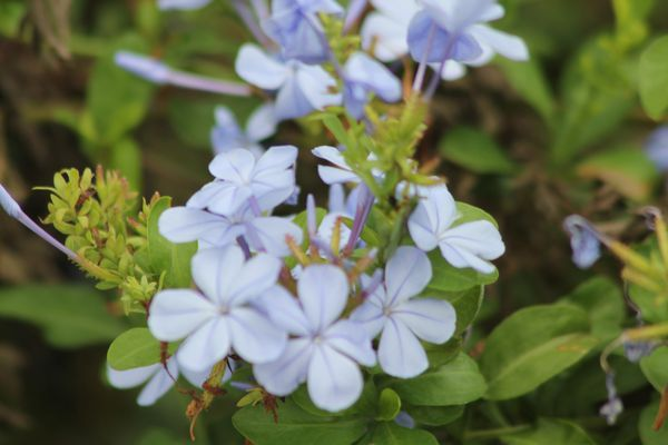 fleurs 4200