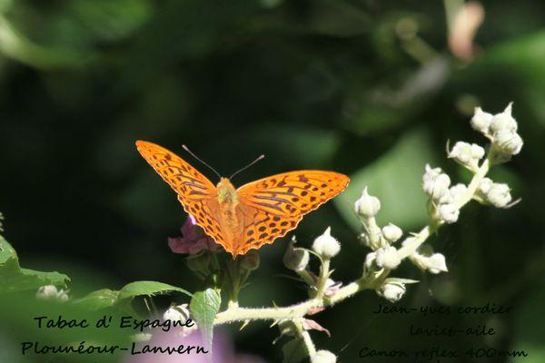 papillons 3959