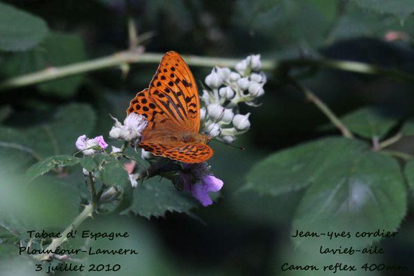 papillons 3968