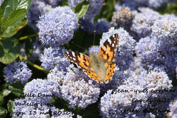 papillons 5629