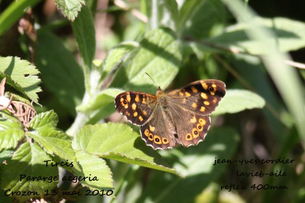 papillons 5641
