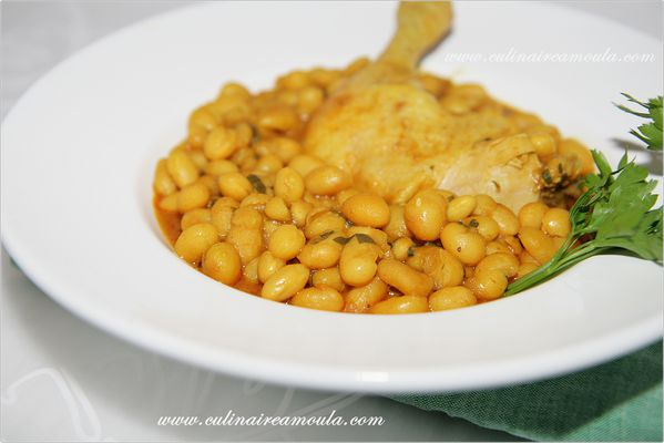 haricot blanc marocaine2