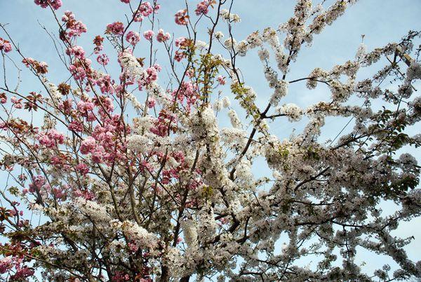 jardinfleuri-050.jpg