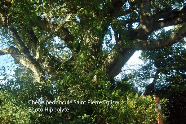arbre-3143-spe.jpg