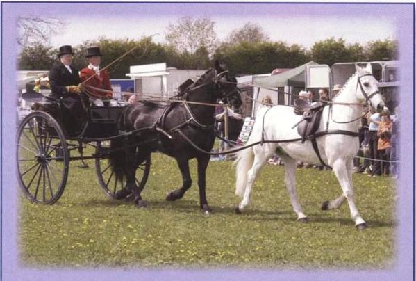 Tandem carriage driving 001