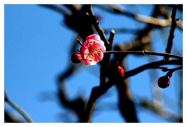 botanique 2872