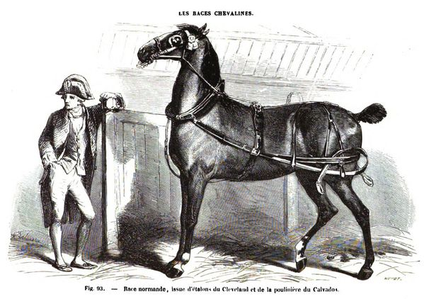 Race Normande Source Louis Moll 1861