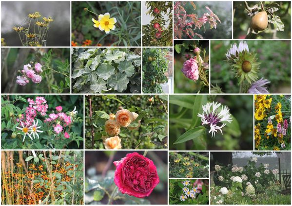 fleurs s37