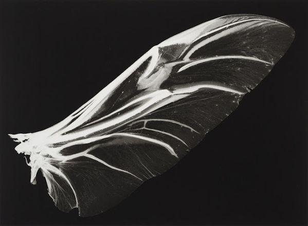 Kazuyuki-Soeno-fossil-of-light.jpg