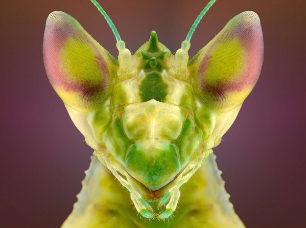 insecte.011.png