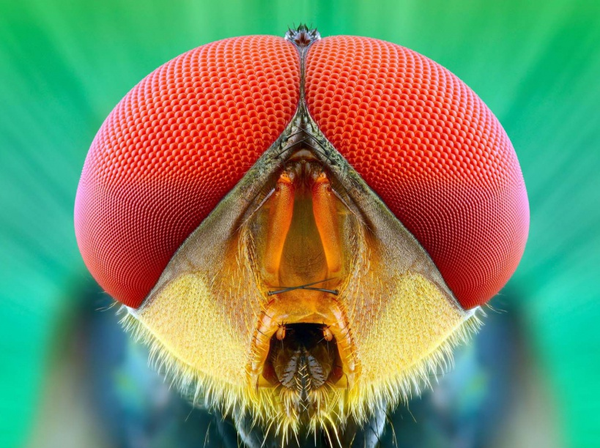 insecte.08.png