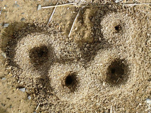 Maisons de fourmis N°1988