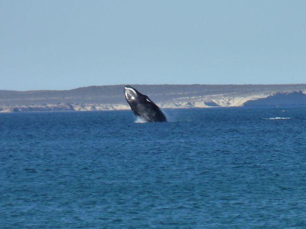 P1020461b Baleine Madryn