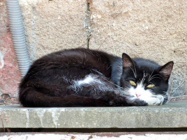chat-aout-2013-baillargues-r.jpg