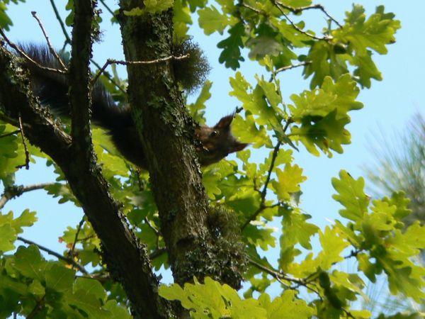ecureuil-curieux-1.jpg