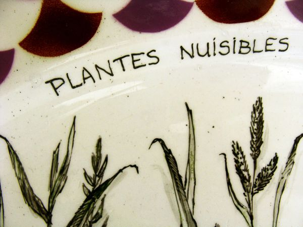 Plat-Plantes-nuisibles-2.jpg