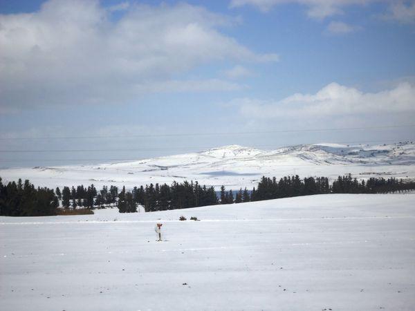 Des collines sous la neige N°02633