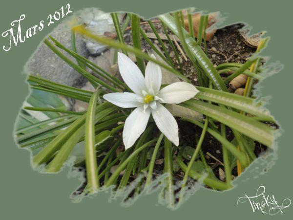Copie-de-Janvier---Fevrier-2012-088.jpg