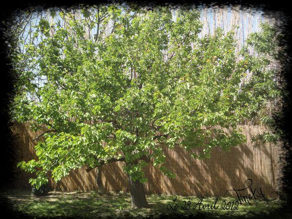 Glycine-LILAS-MUGUETS-PLANTS-DE-TOMATE-Rainette.et-copie-22.jpg