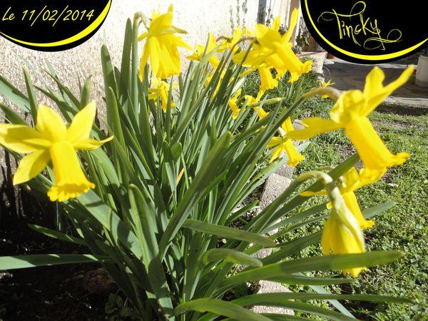 2014-C-Le-11-Fevrier-.Plantes-aquatiques-Jacin-copie-5.jpg