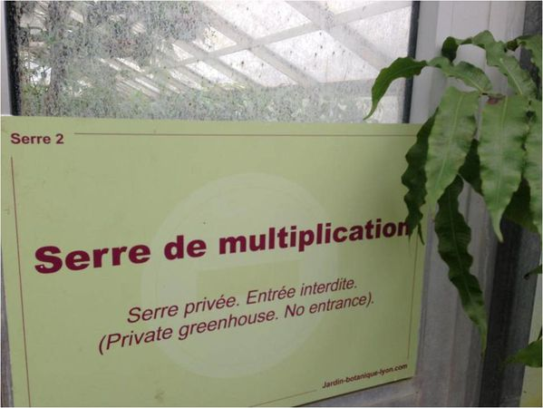 serre-de-multiplication.jpg