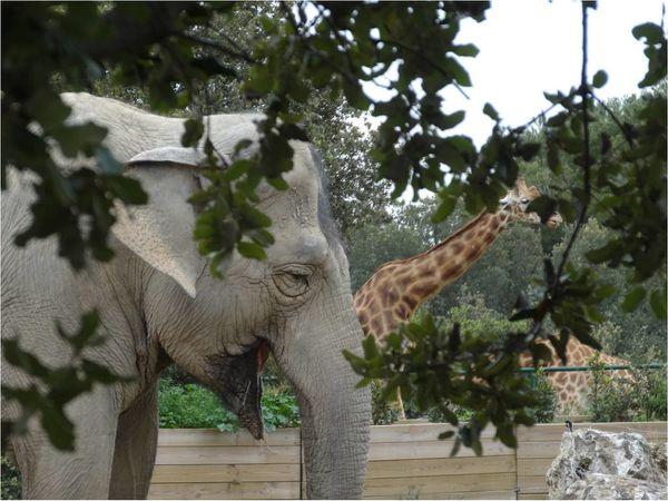 girafe-elephant.jpg