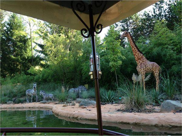 africa-cruise-nigloland-zebres.jpg