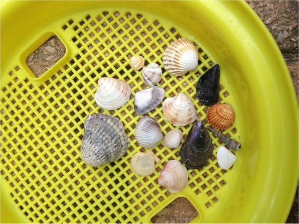 coquillages-ramasses-plage.jpg
