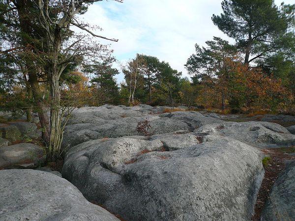 800px-Fontainebleau_Platiere_Apremont.JPG