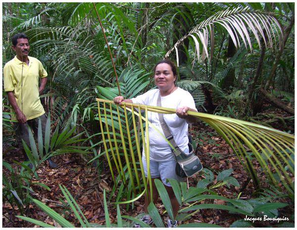 En foret amazonienne 24