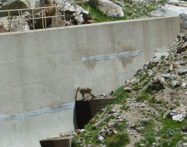 2012-29-06-Lac de la Foux-016
