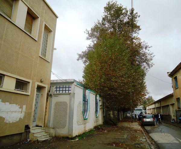 Platane-a-Ain-Bessem-0404.JPG