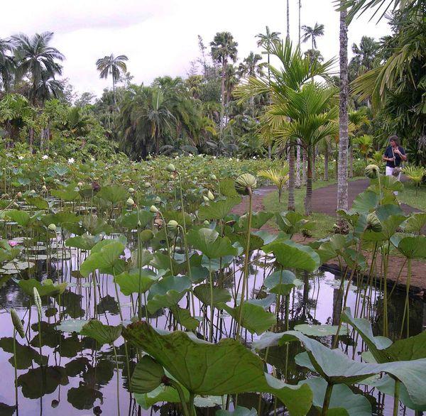 041 Botanic garden Seewoosagur Ramgoolam d