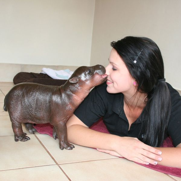 1hippos-theyre-real-3.jpeg