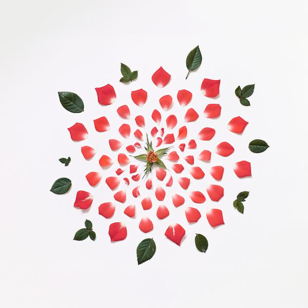 red-rose-exploded-museo-portfolio-rag-A3.jpeg