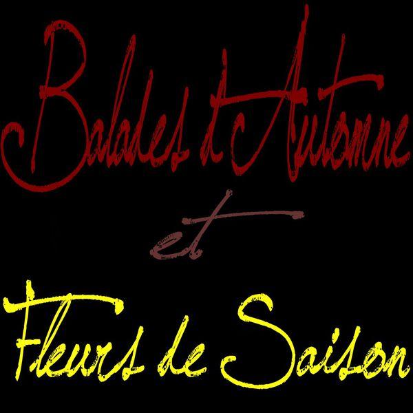 Article-Blog-.Balades-d-Automne-et-Fleurs-de-Saison.jpg