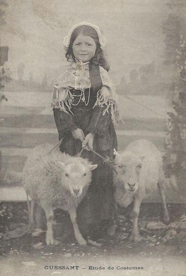 ouessant blanc tiré blogouessant-mouton