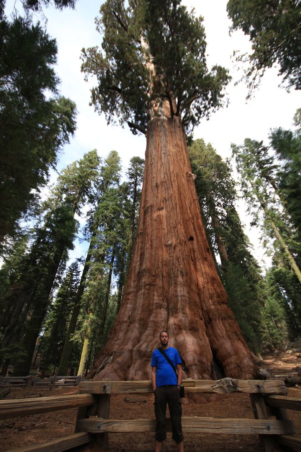 Sequoia national park, giant forest.